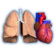 Organi isolati