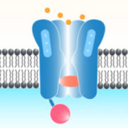 Axon – Molecular Devices catalog