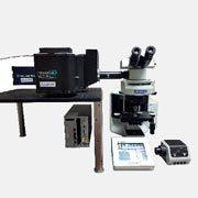 Microscopia confocale di fluorescenza con microscopi dritti e rovesciati