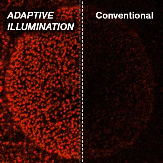 Riduce la luce focalizzata sul campione per esperimenti live imaging